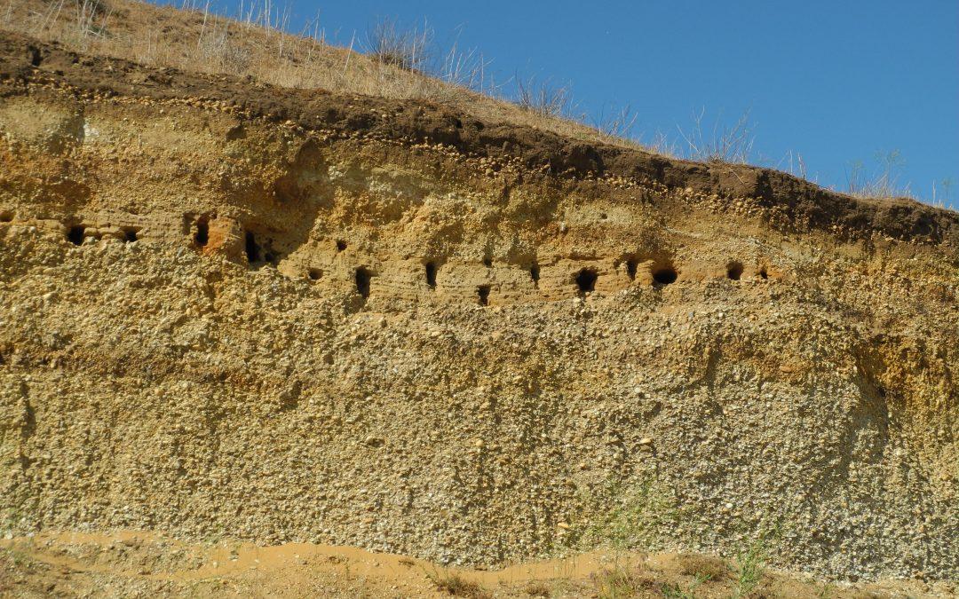 Steinbrüche, Sand- und Kiesgruben – Hotspots der Biodiversität